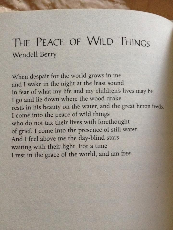 Into The Wild Book Quotes Endearing The Peace Of Wild Things The Sydney Project